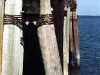 Dock Pilings - Cape May-Lewes Ferry, Lewes, Del.