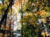 Fall Foliage - Wilmington, Del.