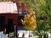 Picket Fence-Golden Tree, Harpers Ferry, W. Va.