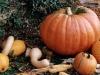 Pumpkins - Historic Odessa, Del.