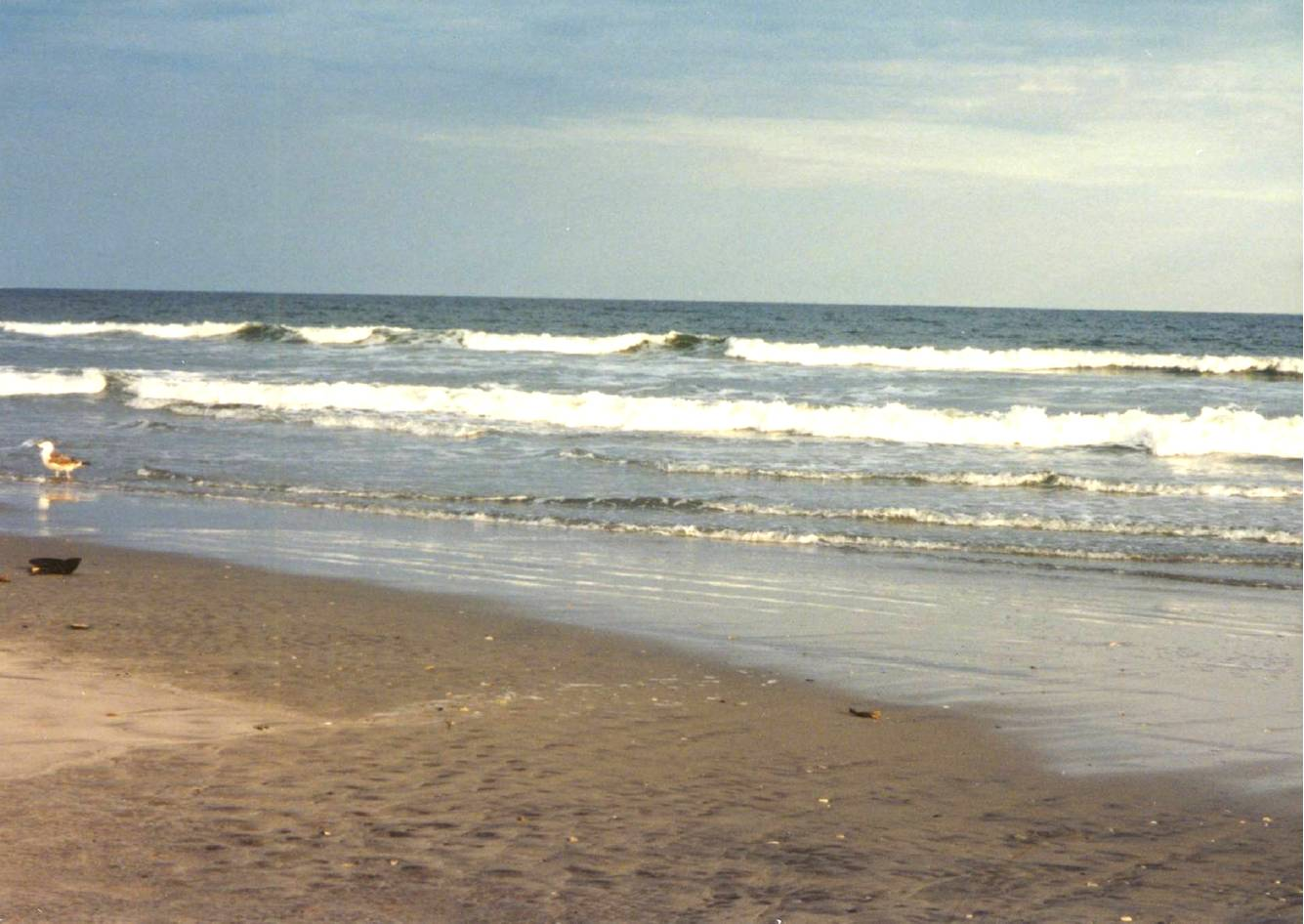 avalon-gull-surf