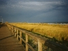 Boardwalk and Dune Grass, Avalon, N.J.