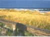 Golden Dune Grass, Blue Surf, Avalon, N.J.