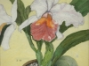 Catlya Orchid