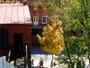 hf003w-picket-fence-golden-tree