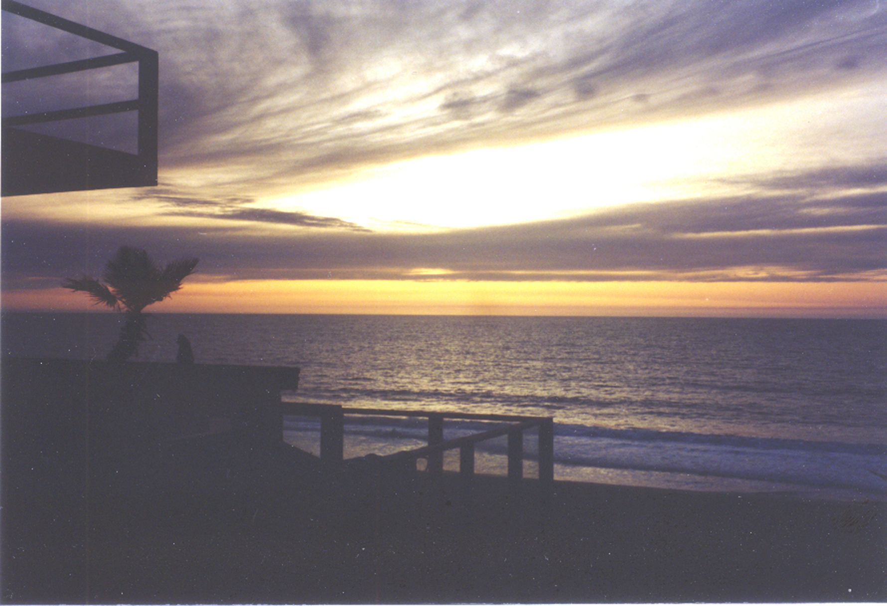 cat-palm-sunset-light-300