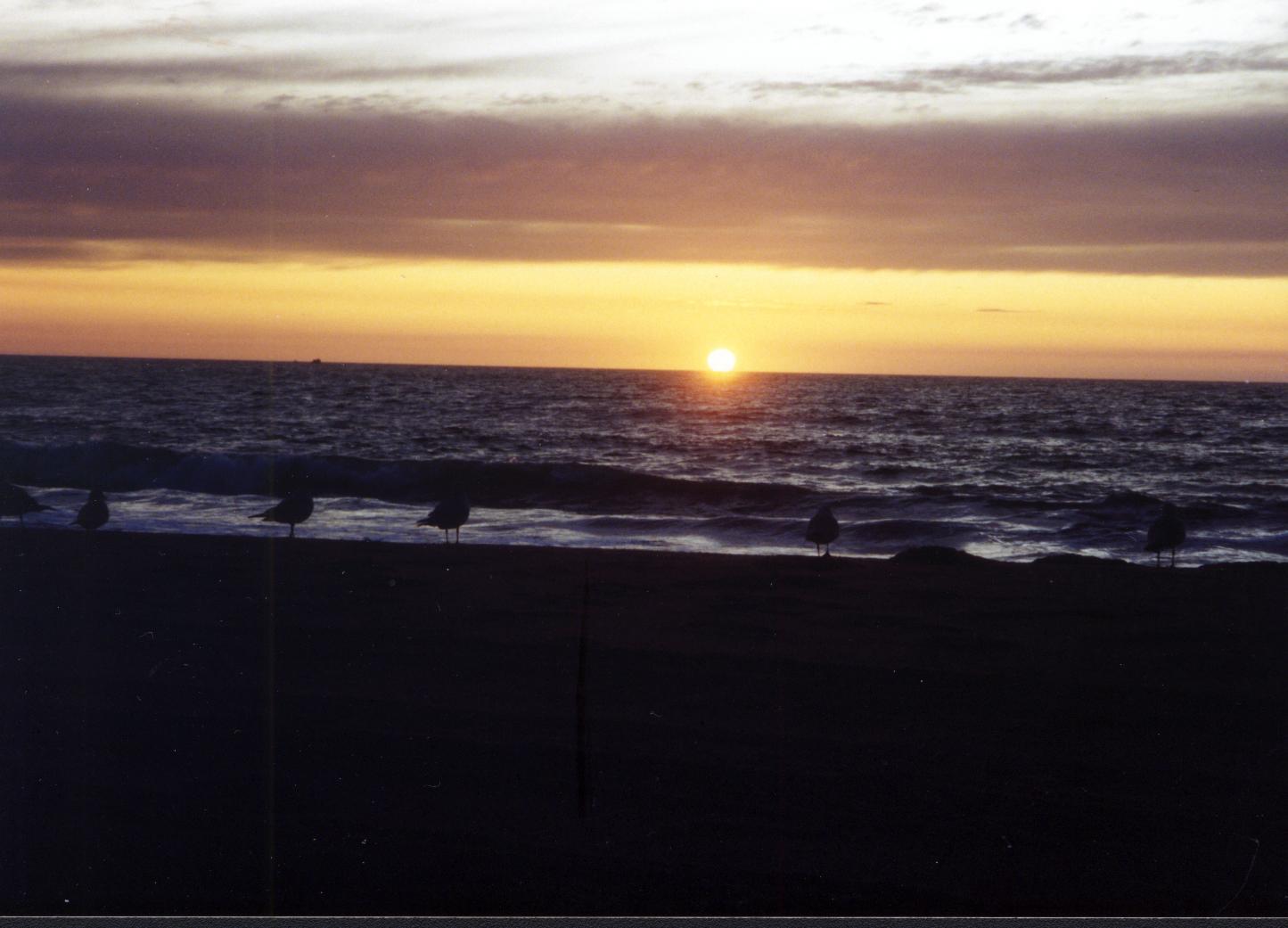 sea-gull-silhouette