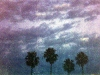 riviera-village-palms
