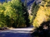 Autumn on Road to Lundy Lake - Mammoth Lakes, Calif.