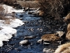 Mammoth Creek - Mammoth Lakes, Calif.