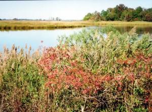 The Blackbird Creek, looking east towards the Delaware River.