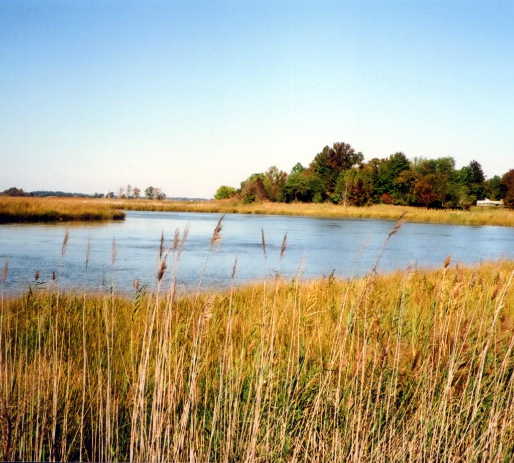 Blackbird Creek