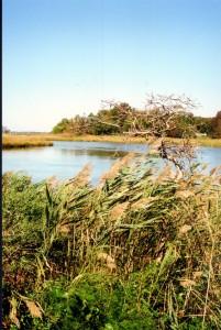 Blackbird Creek 5