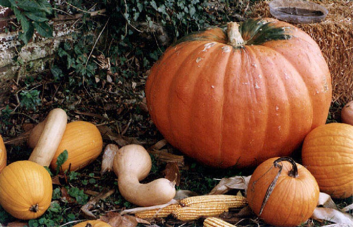 Pumpkins 300 copy
