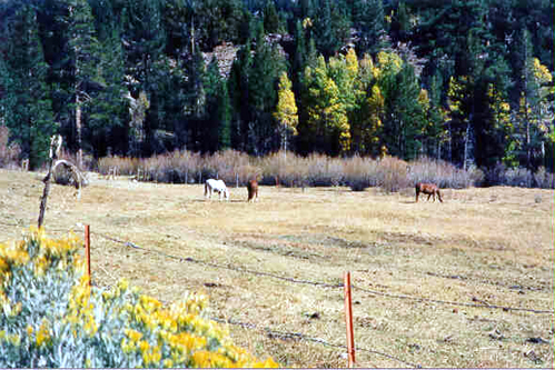 SN010W June Mtn Meadow & Horses