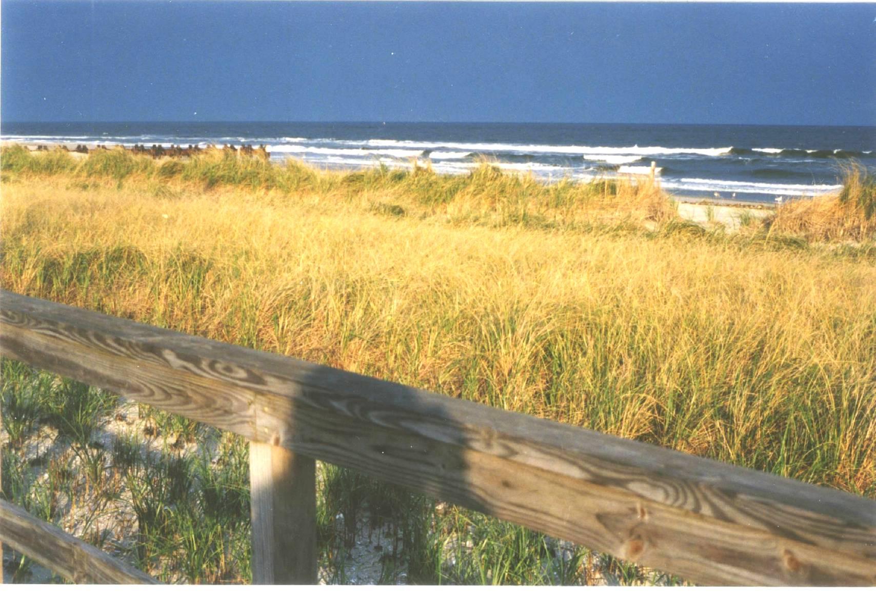 Avalon Gold Dune Grass & Blue Surf