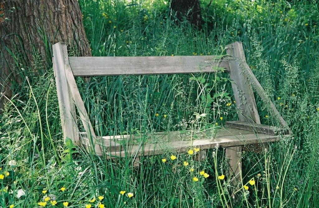 Bench & Buttercups-Silver Lk Splwy-021-9