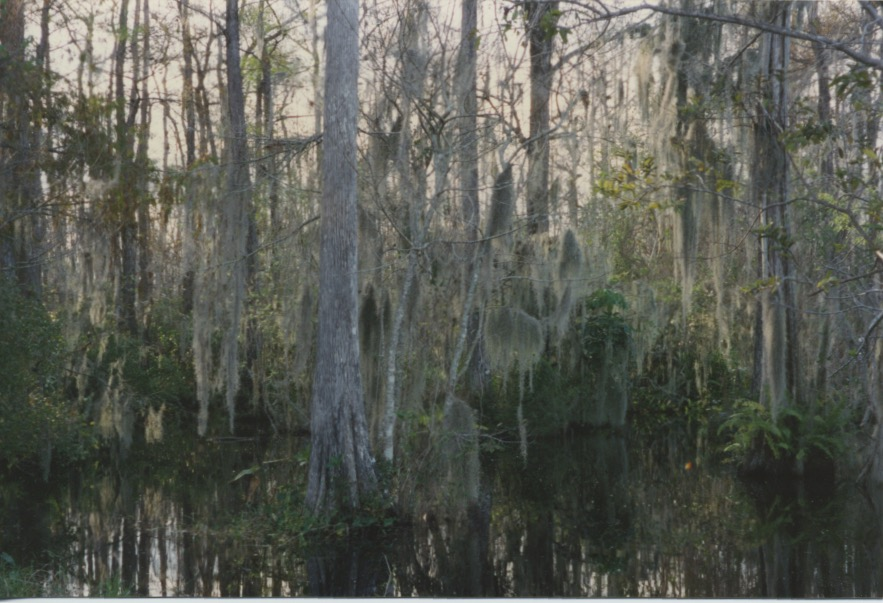 Big Cypress Swamp 1