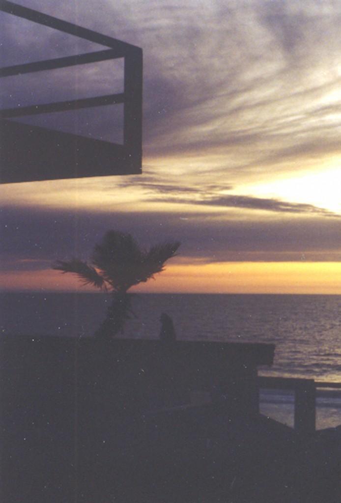 Cat & Palm Sunset Light - Cat 300