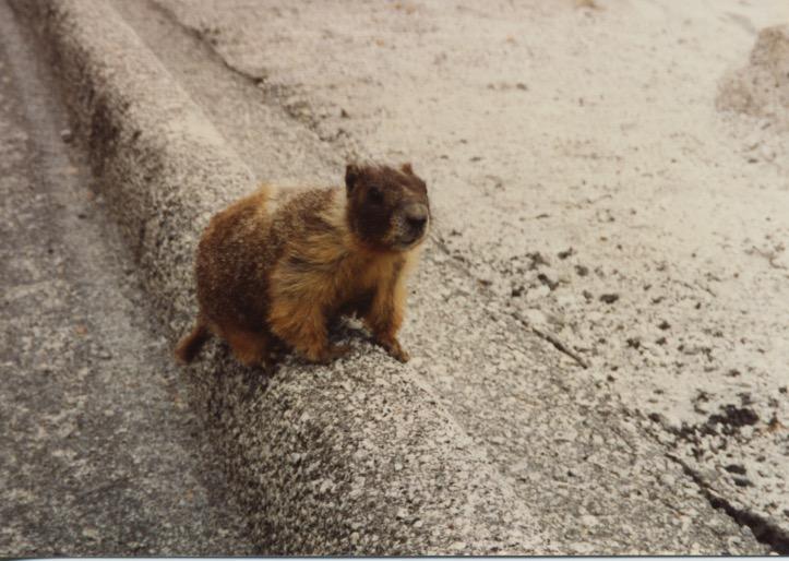 Marmot & Tioga Rd View