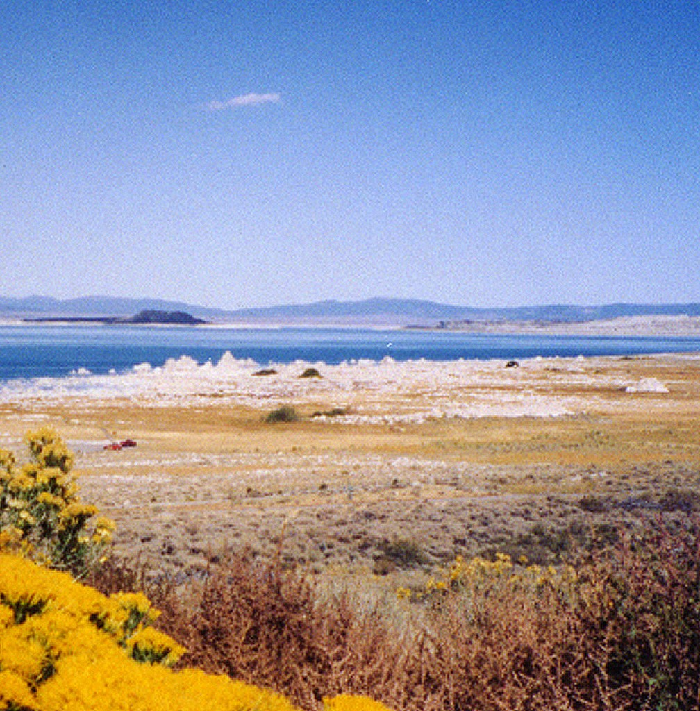 Mono Lake Tufa-Yellow Flowers half SN003 300