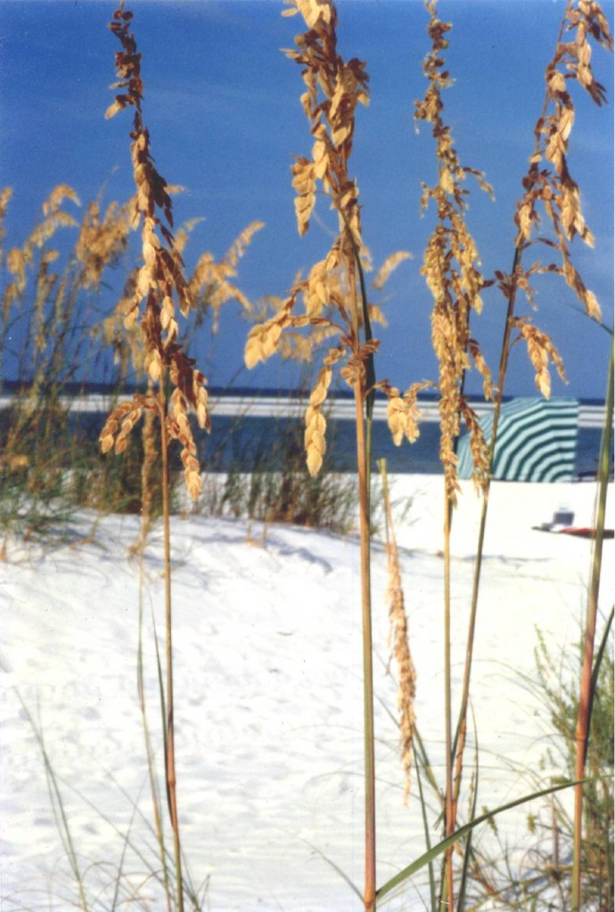 Sea Oats & Sand Bars