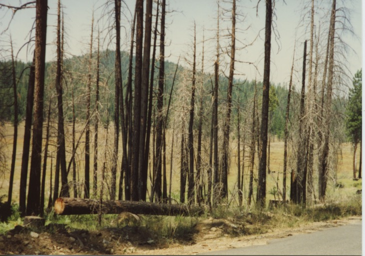 Stanislaus Nat'l Forest 1