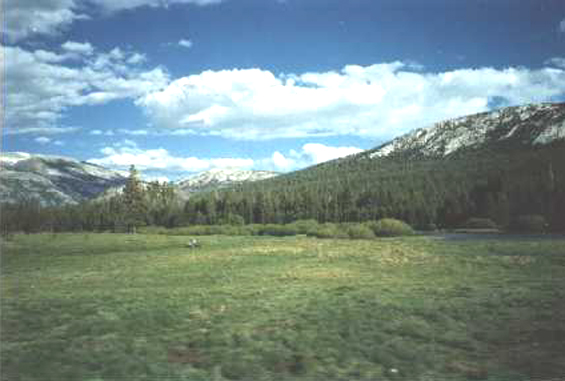 YS007W Tuolumne Meadows